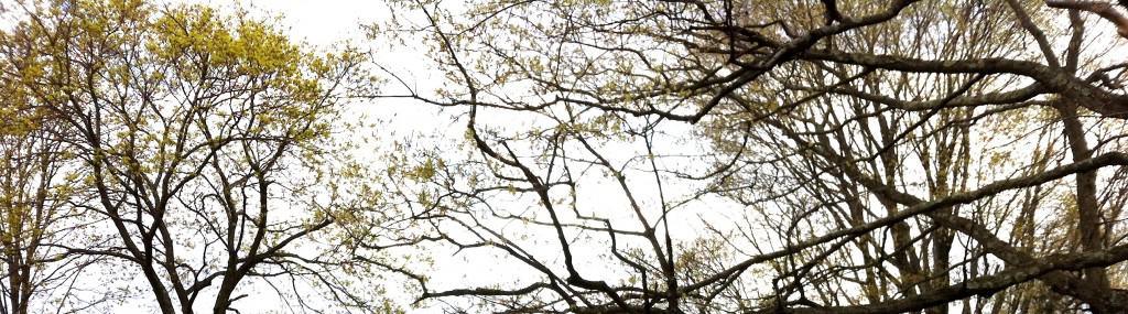 spring_trees_crop